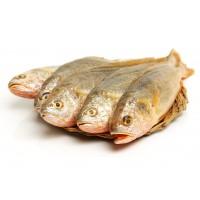 黃魚 (650公克/尾)